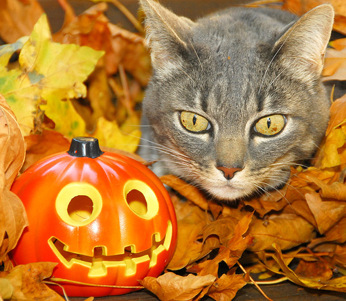 http://www.chundra.ru/uploads/posts/2007-11/animals-hallowin-12.jpg