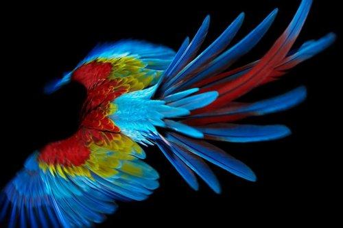 Попугай в замедленной съемке