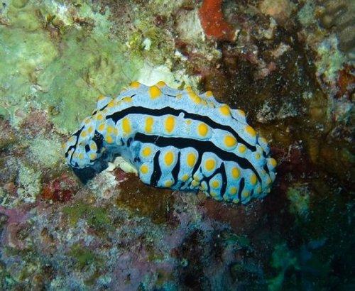 Необычные обитатели моря