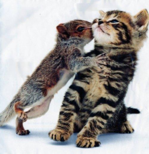 Котенок и бельчонок
