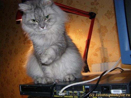 Кошка и провода