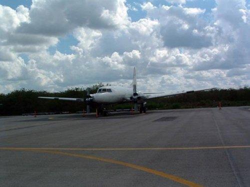 Птица против самолета