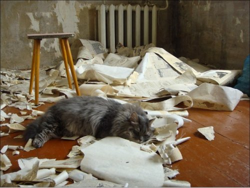 Кот ремонтирует квартиру