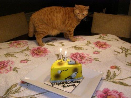День рождения кота