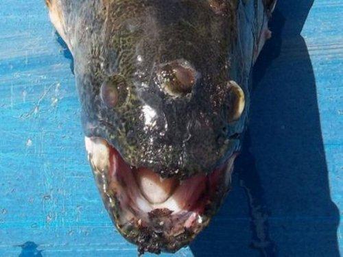 Рыба с тремя глазами