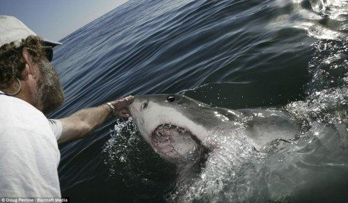 Погладить акулу